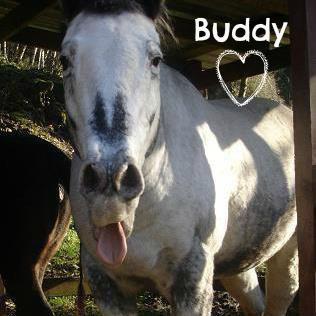 buddythehorse1