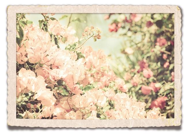 flowersandspring
