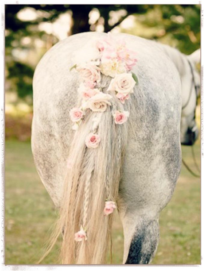 horse flowers rumi quote