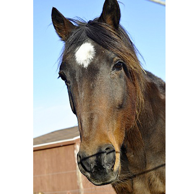 Jate horse rescue
