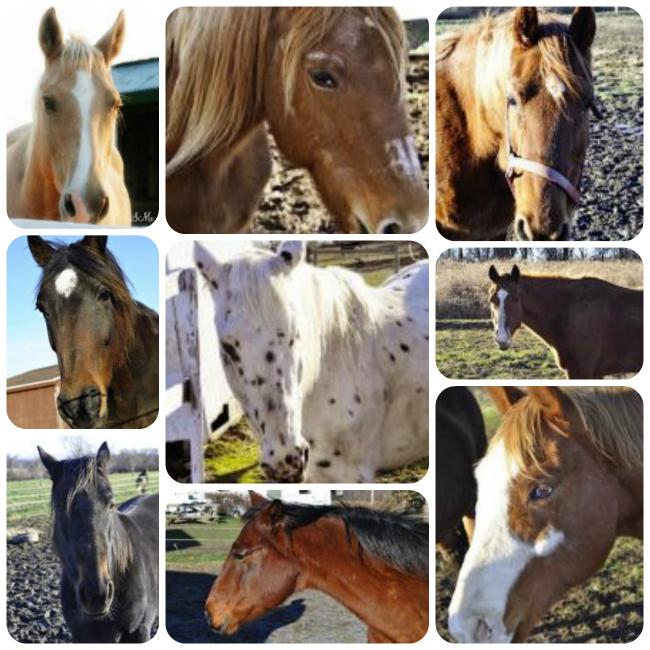 horserescue1