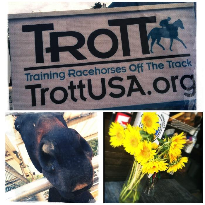 trott-rescue1