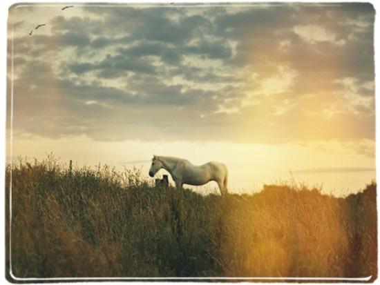 horsebeauty2