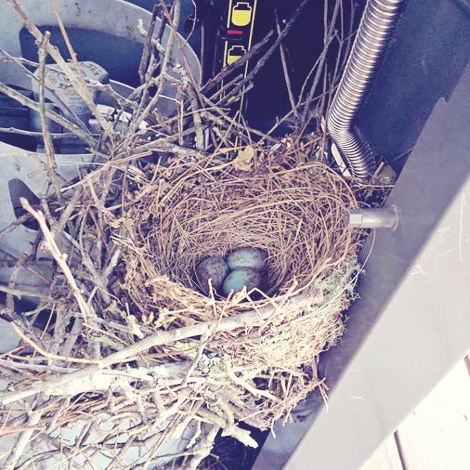 island cowgirl jewelry bird nest