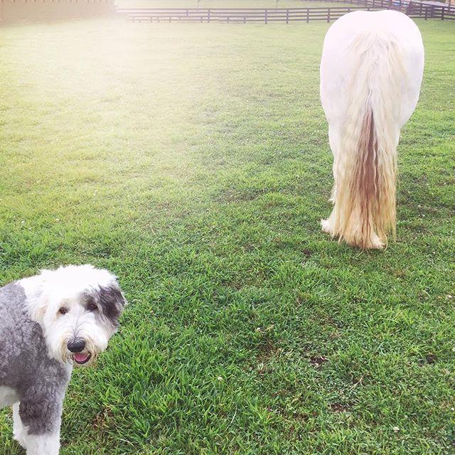 gypsy vanner horse farm